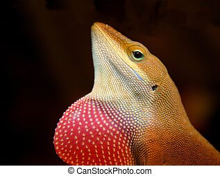 Anole Lizard with Dulap. side profile close up of head