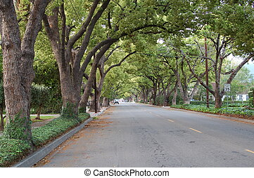 Canopy of Trees lining the road