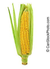 corn cob  - close-up of corn cob against white background