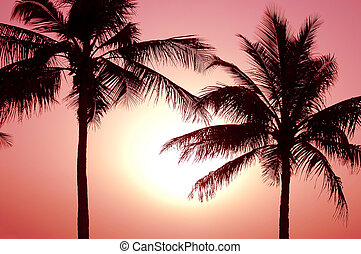 Tropical Sunset - Beautiful tropical sunset between two palm...
