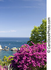 coastal scene with flowers sicily - sicily coast scene with...