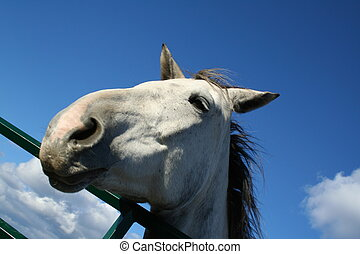 grey and white horse - headshot of a grey and white horse at...