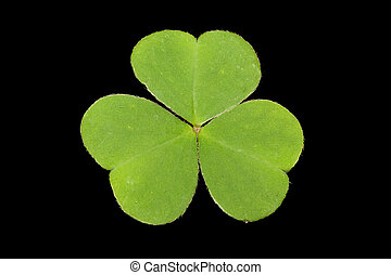 shamrock on black background
