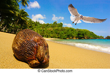 dream beach - seagull and coconut at a tropical beach.