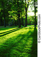 Green park - Green summer park with long shadows from...