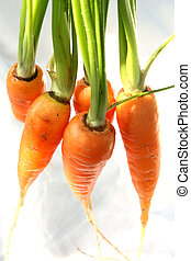 Group of Carrot isolated White Background