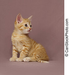 tabby Kitten - Adorable tabby kitten