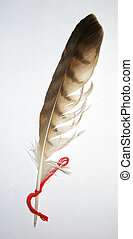 Variegated feather of bird with red string
