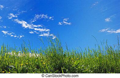 sky background - green grass on blue sky background