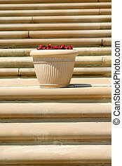 Stairs And Flower Pot - Sand stone stairs and flower pot in...