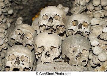 Seis, humano, Cráneos
