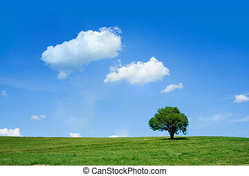 Summer field - Summer day: cloudy sky and a single tree on a...