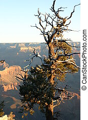 Top of the Canyons - Limited vegetation at the top of the...