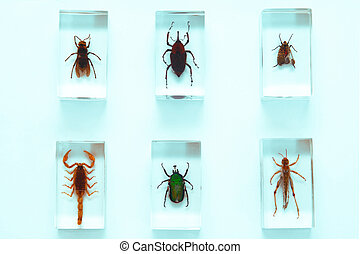 Collection of insects, series, fear, phobia, hobby, concept
