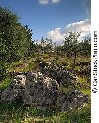 Rough countryside - Image shows a typical Mediterranean...