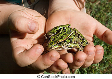 My Pet Frog - little hands holding a cute green frog