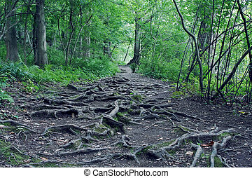Gnarled Roots - Gnarled twisted roots in dark forest.