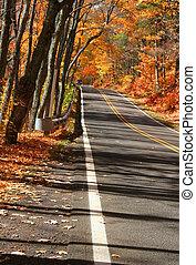 Road Through Autumn Trees