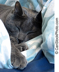 Small Cat Nap - Small grey kitten taking a cat nap among...