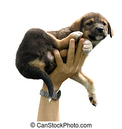 Puppy in the air - Man\\\'s hand holding a little puppy in...