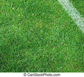Soccer Pitch - Goal line of a soccer pitch