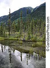 Lake reflection - Forest reflecting in a lake in Mount...