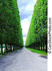 Versailles gardens - Line of sculpted trees along the path...