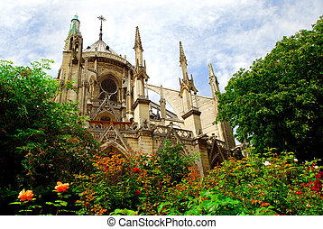 Notre Dame de Paris, garden view with blooming roses