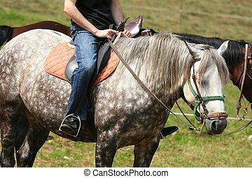 cavallo, uomo