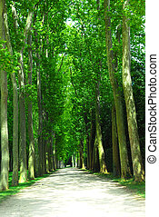 Road and trees - Road surrounded by old green trees in...