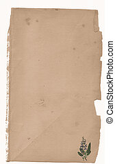 Foresty paper - styled paper