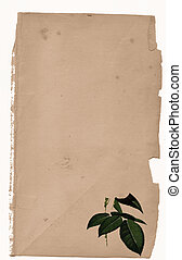 foliage - old paper style