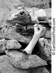 Old skull and bones of a savage deer