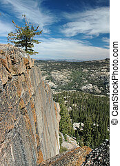 Lone Pine on Cliff - Lone Pine Tree Hanging on Steep Granite...