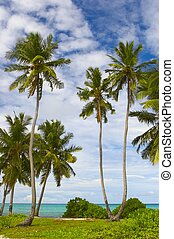 Seascape view with palmtree on the island Gan in Indian...