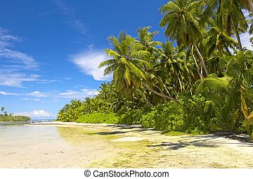 Beautiful tropical forest on the beach in Indian Ocean,...