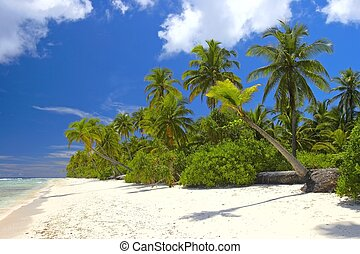 Nice tropical forest on the beach in Indian Ocean - Nice...