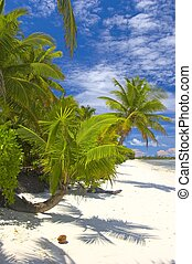 Superior palmtrees on the beach in Indian Ocean, Maldive...