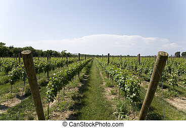 Lush Green Winery on Long Island - Winery on Long Island New...