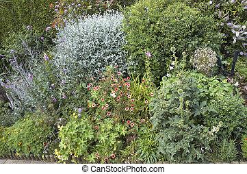 Cottage garden - An English cottage garden border in flower