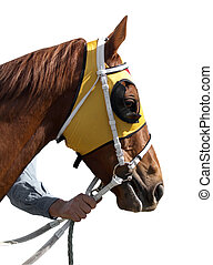 The Yellow Hood - A racehorse wearing a bright yellow hood...
