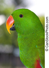 Green Parrot - Nice parrot with a lot of green colours