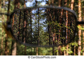glasses - forest throgh the glasses