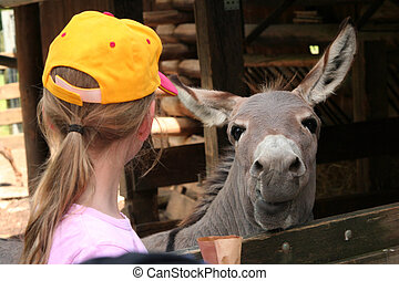 Eye to eye - Girl wearing yellow cap and donkey in the zoo