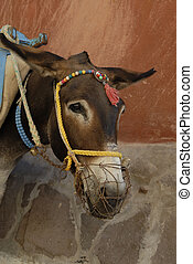 Donkey wating for work - Donkey waiting for his daily work