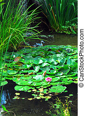 Landscape pond - Lanscape pond with aquatic plants and water...