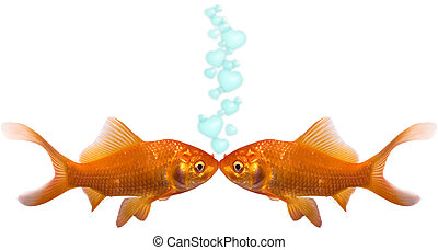 Goldfish In Love - Two goldfish kissing with heart bubbles...