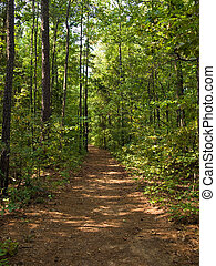 Forest Path - A hiking trail through the woods in South...