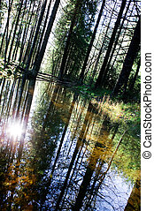Forest Reflection - A reflection in the forest with a...