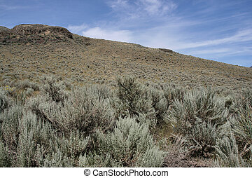 Steppe in Canada - Steppe near Kamloops city in Canada...